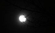 Bright-moon-torkomian-photography