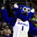 Buffalo Victor E. Bull w swim