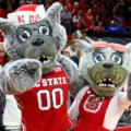 North Carolina State Wolfpack Mr and Mrs Wuf